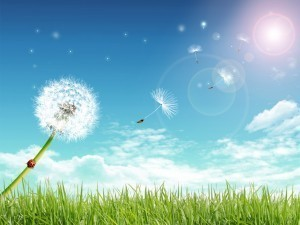 air-quality-dandelion