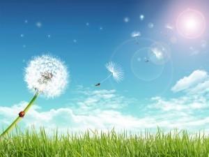 air-quality-dandelion